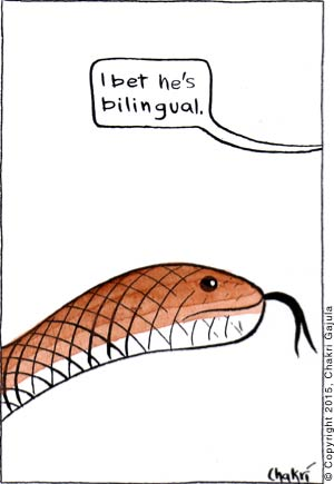 Snake with a split tongue is shown, and someone going 'I bet he is bilingual.'